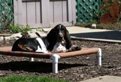 Pipe Beds for Dogs